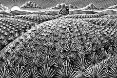 Aagave Background art