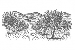 Almond-Orchard-art