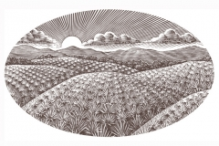 Cazadores_Agave_Fields
