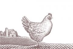 Chicken_Art