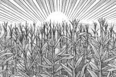 Corn_Fields_01