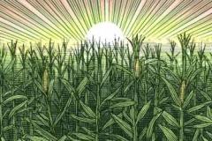 Corn_Fields_02