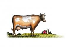 Cow_Pasture