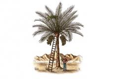 Date_Tree