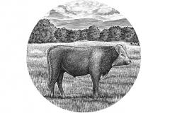 Farm_Cow
