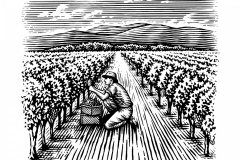 Grape Picker woodcut