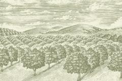 Olive-Groves-art
