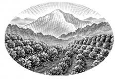 Orchard_Landscape