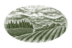 Ranch_Vineyard
