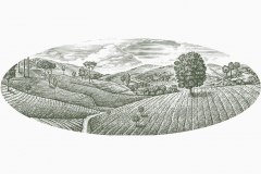 Tea_Fields