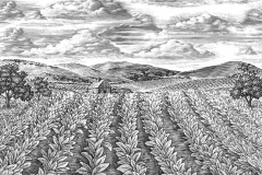 Tobacco-Fields-art