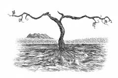 Vine Illustration 1