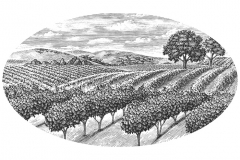 Vineyard-Scene-layout