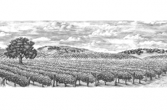 Vineyard_landscape