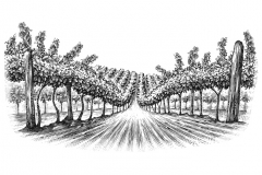 Vineyard_rows