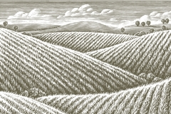 Wheat_Fields