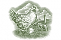 chicken_farm