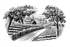 vineyard_scene