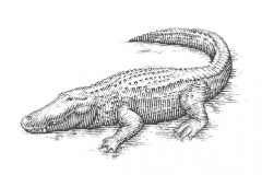 Alligator-art-1