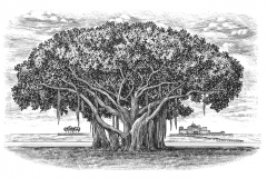 Banyan-Tree-art
