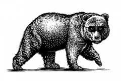 Bear Thief -