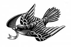 Bird final art2