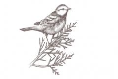 Bird_on_branch