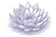 Blue-Lotus-Flower-art-3