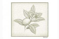 Botanical_Lemon