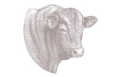 Bull_001
