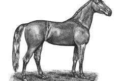 Dark Horse art - Steven Noble