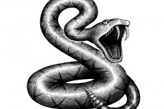 Diamond Back Snake1