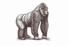 Gorilla Woodcut art