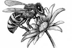 Honey Bee art 1