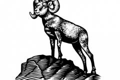 Ram art 1