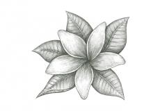 Rev-Jasmine-art