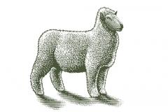 Sheep-art-001