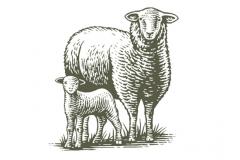 Sheep_woodcut