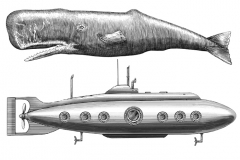 Sperm_Whale_vs_Submarine