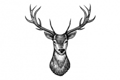 Stag-art