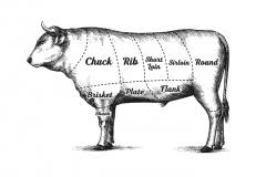 Steer_cow