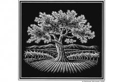 Stolpman-oak-tree