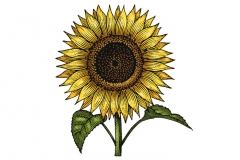 Sunflower-art--color