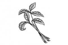 Tea-leaves-art
