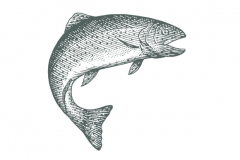 Trout_Woodcut