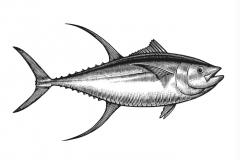 Tuna-art
