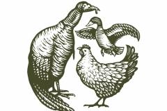 Turkey Chicken Duck art