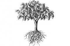 Vine_Tree