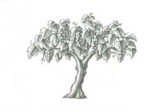 Vineyard-tree