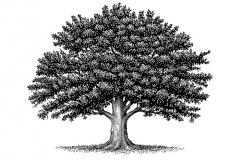 revised_tree
